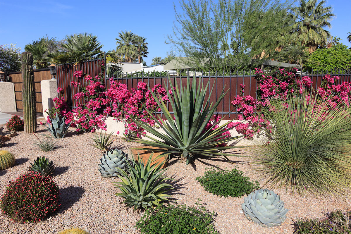 No watering the garden with these 7 drought tolerant for Low maintenance drought tolerant plants