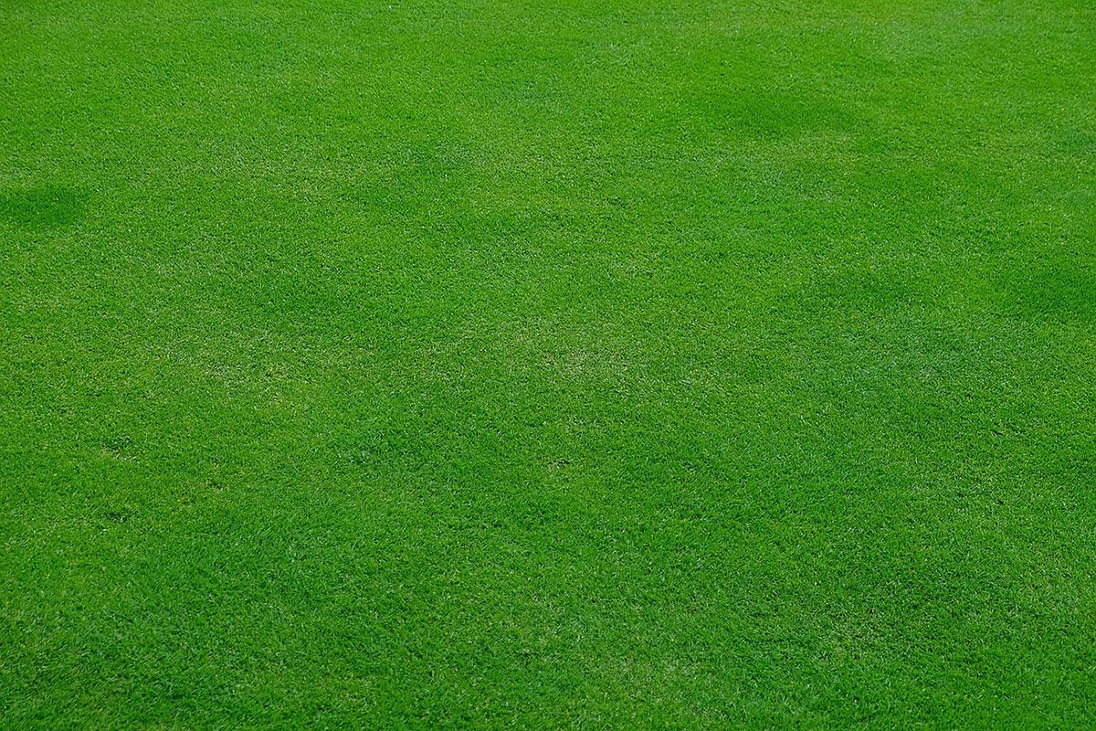 flat lawn