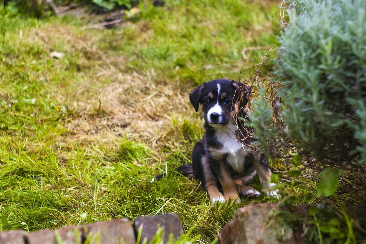 pets in garden